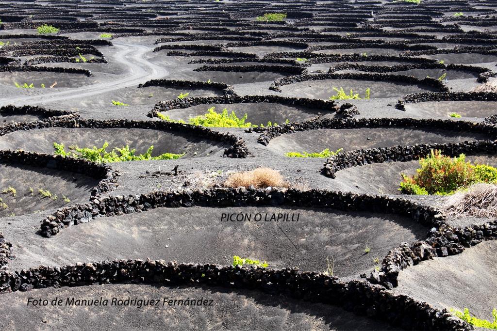 Forma de cultivo de la vid: hoyos en picón protegidos con piedras.